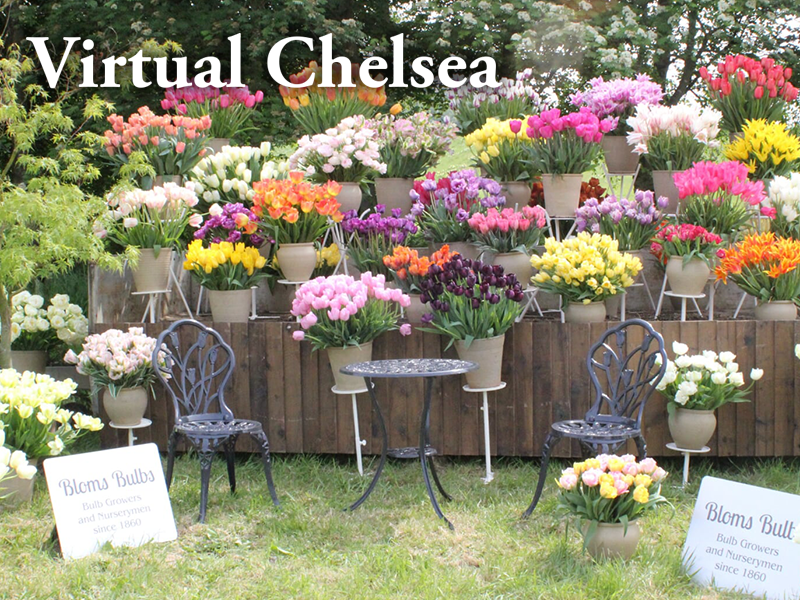 Bloms Bulbs Virtual Chelsea 2020