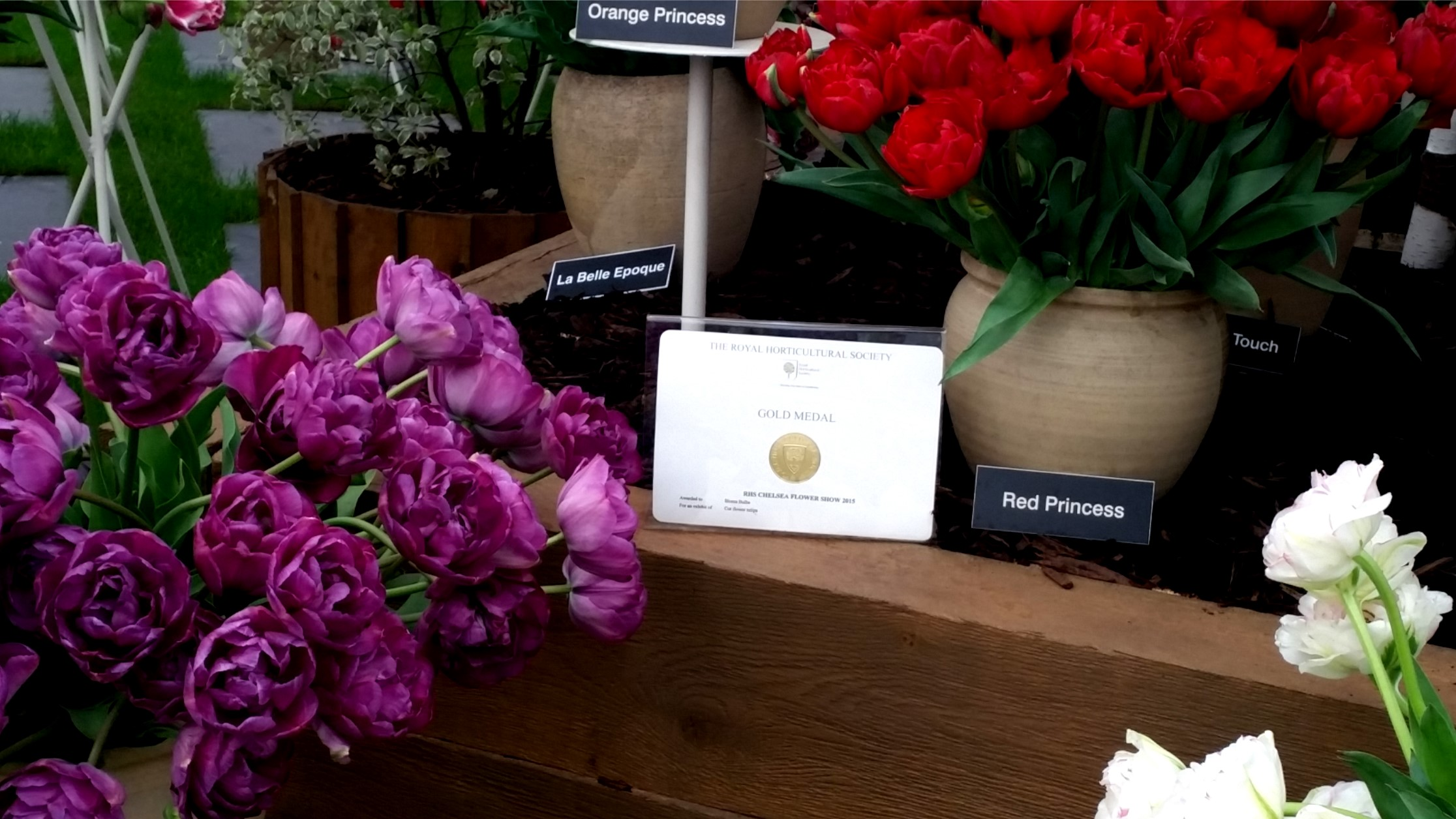 Bloms Bulbs 64th Gold Medal at Chelsea Flower Show