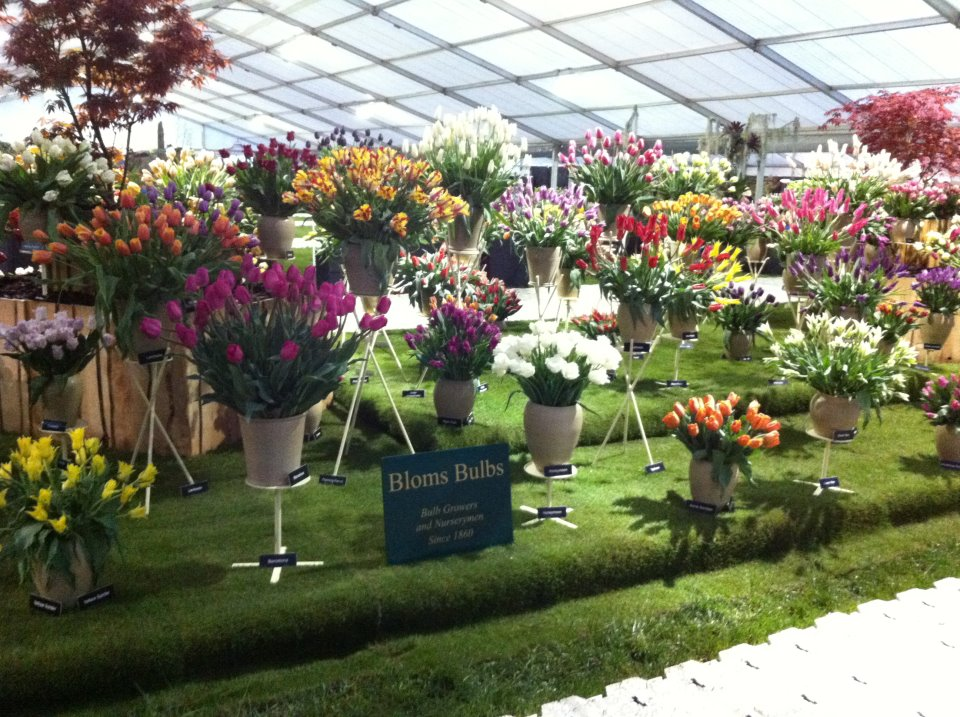 RHS Malvern Spring Show 2017 and Bloms Bulbs Show Gardens