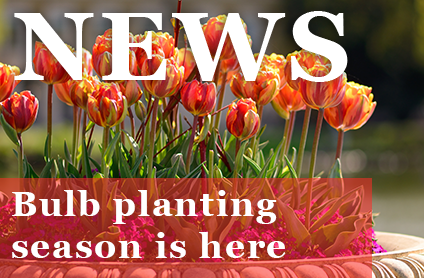 Bulb Planting Season is Here